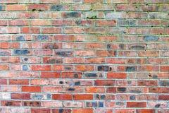 Eine verwitterte Wand des roten Backsteins mit Grünalgen Stockfoto