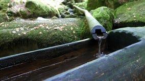 Eine Viehbestandquelle ist ein Nebenflusswasserfall im Sommerwald stock video footage