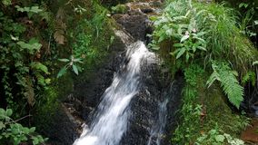 Eine Viehbestandquelle ist ein Nebenflusswasserfall im Sommerwald stock footage