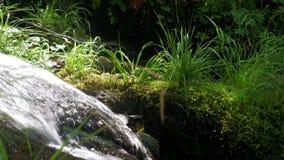 Eine Viehbestandquelle ist ein Nebenflusswasserfall im Sommerwald stock video