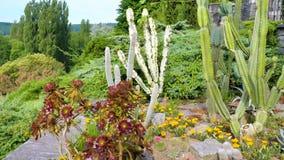 Eine Vielzahl des Kaktus im Garten Stockbild
