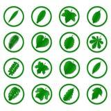 Eine Vielzahl von grünen Blättern Lizenzfreie Stockbilder