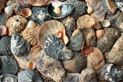 Eine Vielzahl von Muscheln auf Sand Lizenzfreie Stockfotografie