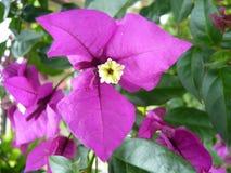 Eine violette Blume in Cocora lizenzfreie stockbilder