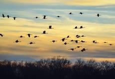 Eine Vogelgruppe im Flug stockbilder
