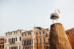 Eine Vogelmöve sitzt auf einem Klotz gegen Stockbilder
