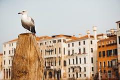 Eine Vogelmöve sitzt auf einem Klotz gegen Lizenzfreies Stockbild