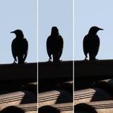 Eine Vogelstarren in den verschiedenen Richtungen lizenzfreie stockfotografie