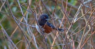 Eine Vogelstellung allein lizenzfreie stockbilder