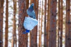 Eine Vogelzufuhr gemacht von einer Plastikflasche, eine Vogelzufuhr befestigt zu einem Baum, eine Taube auf einer Vogelzufuhr Lizenzfreies Stockfoto