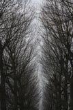 Eine Waldansicht in die Niederlande Lizenzfreie Stockbilder