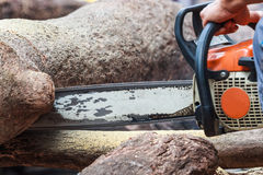 Eine Waldarbeitskraft, die den Stamm mit Kettensäge schneidet Lizenzfreie Stockbilder