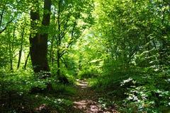Eine Waldspur Stockbilder