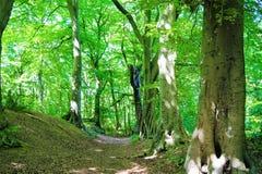 Eine Waldspur Stockfotografie