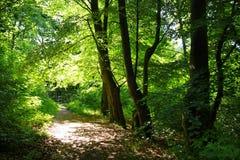 Eine Waldspur Lizenzfreie Stockfotos