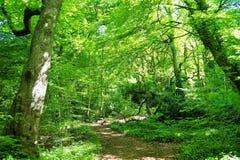 Eine Waldspur Stockbild