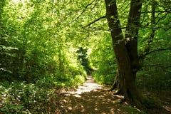 Eine Waldspur Lizenzfreie Stockbilder