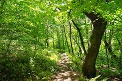 Eine Waldspur Stockfoto
