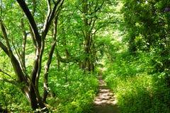 Eine Waldspur Lizenzfreie Stockfotografie