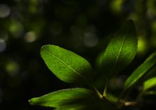 Eine Waldstimmung. lizenzfreies stockbild