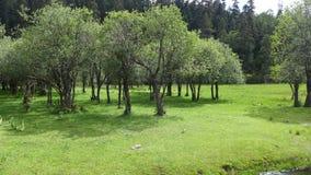Eine Waldung von Bäumen stockbild