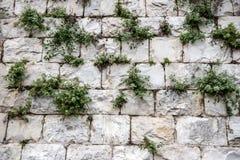 Eine Wand von großen Blöcken von Jerusalem-Stein mit grünem Gras Lizenzfreie Stockfotos