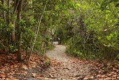 Eine Wanderung im Wald lizenzfreie stockbilder