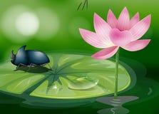 Eine Wanze über waterlily Stockfotos