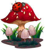 Eine Wanze, die am roten riesigen Pilz kriecht Stockfoto
