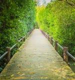 Eine Wegmethode unter einem Mangrovenwald Stockfoto