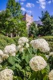 Eine weiße Blume auf dem Garten von Notre Dame, Illinois lizenzfreie stockbilder