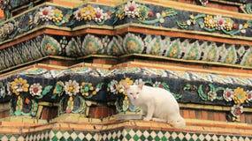 Eine weiße Cat And Old Pagoda Decorate mit buntem Keramikziegel lizenzfreie stockbilder