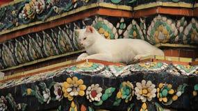Eine weiße Cat And Old Pagoda Decorate mit buntem Keramikziegel lizenzfreies stockbild