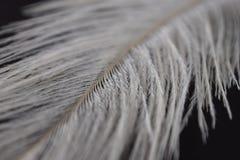Eine weiße Feder Stockbild