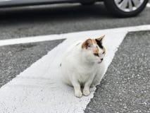Eine weiße Katze mit den schwarzen und braunen Markierungen stockfotografie