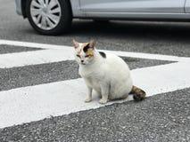 Eine weiße Katze mit den schwarzen und braunen Markierungen stockbilder
