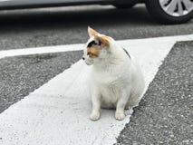 Eine weiße Katze mit den schwarzen und braunen Markierungen lizenzfreies stockfoto