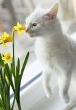 Eine weiße Katzenperspektive Stockbild