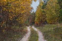 Eine Weise durch den Abendherbstwald um die Bäume mit gelben Blättern Lizenzfreie Stockfotos