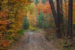 Eine Weise durch den Abendherbstwald um die Bäume mit y Lizenzfreies Stockfoto