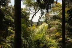 Eine Weise durch den dichten Dschungel stockfotografie