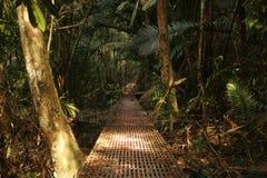 Eine Weise durch den dichten Dschungel lizenzfreie stockbilder