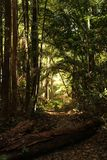 Eine Weise durch den dichten Dschungel lizenzfreie stockfotografie