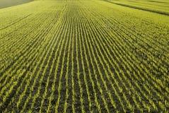 Eine Weizenwiese Lizenzfreie Stockfotografie