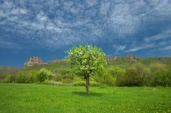 Eine Wiese mit einem Baum Lizenzfreies Stockbild