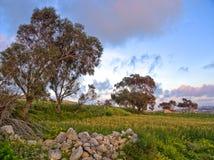 Eine Wiese mit einer Schuttwand, einem Weizenfeld und Bäumen, die an einem Standort genommen wurden, nannte Fawwara in Malta Lizenzfreie Stockfotografie