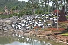 Eine Wiese mit Seeelefanten und Gras und Bäume und Steine und Teich im tropischen botanischen Garten Nong Nooch nahe Pattaya-Stad Lizenzfreies Stockfoto