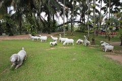Eine Wiese mit weißen Schafen und Gras und Bäume und Steine im tropischen botanischen Garten Nong Nooch nahe Pattaya-Stadt in Tha Lizenzfreies Stockbild