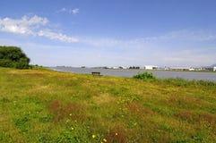 Eine Wiese mit wilden Blumen auf einem Flussstrand Stockfotografie