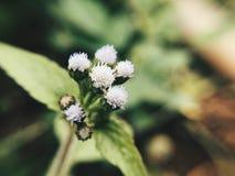 Eine wilde Blume Stockfotografie